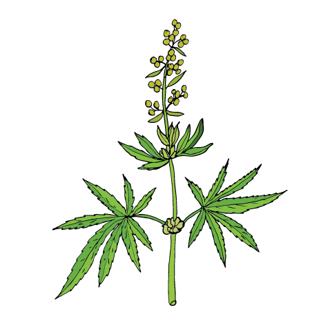 CBD Hemp Seed Oil